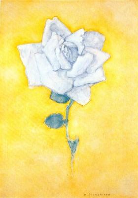 Witte roos tegen geel plafond